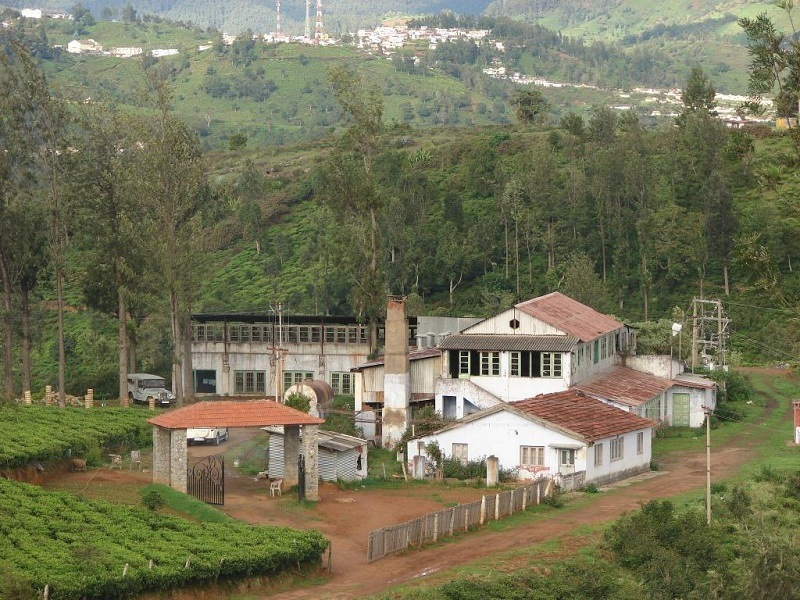 Tea Manufacturing facility & Museum